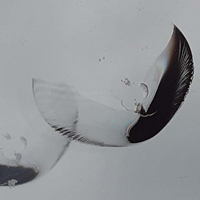 Oprava čelného skla - kridla